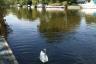@ IBM Site - River Thames